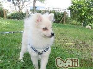 如何训练幼犬回应名字-狗狗行为训练